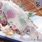 伝説のイカ 活〆ケンサキイカ 1kg 送料無料 島根県 新鮮 魚介類 人気 贅沢