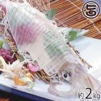 伝説のイカ 活〆ケンサキイカ 2kg 送料無料 島根県 新鮮 魚介類 人気 贅沢