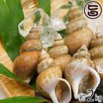 隠岐の白バイ貝 2kg 島根県 新鮮 魚介類 人気 贅沢 送料無料