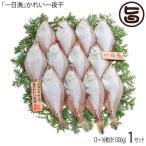 かれい一夜干 1200g 約9〜16枚 島根県 人気 魚介類 一夜干し  条件付き送料無料