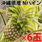 期間限定 沖縄県産 Nパイン 約0.9kg×6玉  送料無料 沖縄 人気 南国フルーツ 希少