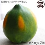 石垣産 サンゴパパイヤ 種なし 約700g×2個 果汁たっぷり 糖度13.8度 香り高く繊細な味わい フルーツ 沖縄 土産 果物  送料無料