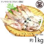 浜田港 ケンサキイカ 丸 約1kg プロトン凍結 シーライフ 山陰沖 白いか 身が柔らかく 甘みが強い 刺身にぴったり 条件付き送料無料