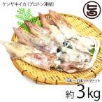 浜田港 ケンサキイカ 丸 約3kg プロトン凍結 シーライフ 山陰沖 白いか 身が柔らかく 甘みが強い 刺身にぴったり 条件付き送料無料