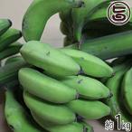 沖縄産 数量限定 幻の島バナナ 約1kg 送料無料 沖縄 人気 南国野菜 希少 土産