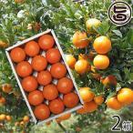 屋久島たんかん 贈答用 Lサイズ 5kg 約30玉×2箱 みかん フルーツ 果物 柑橘 新鮮 ギフト 条件付き送料無料