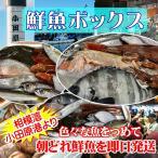 小田原 朝獲れ 鮮魚ボックス 2kg 【その日に水揚げされた鮮魚の詰合せ】早朝、競り落とした魚を詰め込んで即日配送いたします【冷蔵便】