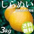 しらぬい 3kg 10〜15玉 愛媛県西宇和産 不知火 デコポン 送料無料 贈答品 お取り寄せ