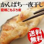 一夜干し かんぱち 8片 約640g 愛媛県 宇和島市 こもぶち 焼き魚 送料無料 贈答品 お取り寄せ