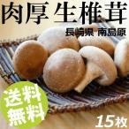 ショッピングお中元 生椎茸 肉厚 15枚 長崎県産 サンエスファーム 送料無料 贈答品 お取り寄せ