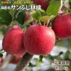 サンふじ ふじ 林檎 リンゴ りんご 福島産 サンふじ林檎 ご家庭用約3kg(7〜11玉)【送料無料】