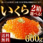 いくら 選べる2箱 600g 鱒 送料無料 醤油漬け 辛子漬け イクラ 夏 ギフト 海鮮 食品  福岡 お土産 お返し 小粒 丼 グルメ 訳あり わけあり