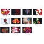 【直筆サイン入り オリジナル・インクジェットプリント付き】色情花 〜Painting Flower / 荒木経惟