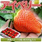 いちご 千葉県産 アイベリー 12〜15粒 約500g イチゴ 苺 果物 フルーツ 国産 ギフト 贈り物 プレゼント 贈答 お取り寄せ お礼 お返し 冷蔵