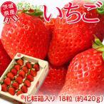 いちご イチゴ 苺 ギフト 茨城県産 菅谷利男さんのいちご 化粧箱 1箱18粒  (約420g) ※冷蔵 送料無料