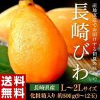 送料無料 フルーツ びわ 長崎県産 露地栽培 化粧箱 L〜2L 約500g 青秀品
