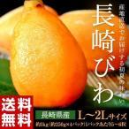 送料無料 フルーツ びわ 長崎県産 露地栽培 L〜2L 約1kg(250g×4パック) 青秀品
