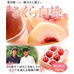 ≪送料無料≫福島産 菱沼さんのさくら白桃 秀品  約2キロ ☆