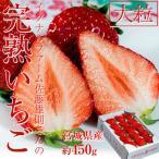 宮城県産 イグナルファーム佐藤さんの大粒「完熟とちおとめ」 約450g 化粧箱