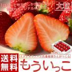 《送料無料》イグナルファーム佐藤さんが作る 宮城のブランドいちご「もういっこ」大粒サイズ約450g×1パック(12〜15粒入)※冷蔵