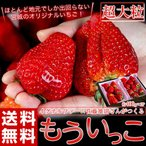 《送料無料》イグナルファーム佐藤さんが作る 宮城のブランドいちご「もういっこ」超大粒サイズ約400g(8〜10粒入)×2パック※冷蔵