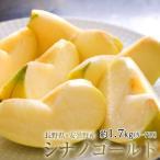 りんご リンゴ 林檎 長野県 安曇野産 シナノゴールド 約1.7kg 風袋込み (5〜7玉) 送料無料