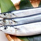 サンマ 北海道産 獲れたて 塩さんま 熟成された天然の秋刀魚 さんま 3尾