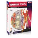 人体解剖模型 筋肉・骨格モデル Human Muscle & Skeleton Model