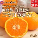 三ケ日みかん 青島 5キロ 黒柳さんちの低農薬 有機肥料栽培三ケ日みかん 送料無料