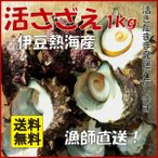 産直 熱海多賀産 天然 活さざえ サザエ BBQ 約1kg入 大きさが選べます 贈り物 熨斗紙 クーポン割引