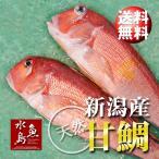 新潟産 天然 甘鯛 アマダイ(グジ)800〜899g・2尾(生冷凍) 送料無料