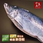 厳選「新潟産・天然 新巻鮭」 3kg物「送料無料」