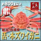 活ズワイガニ姿 新潟・佐渡産「活 本ズワイガニ」(生 本ずわい蟹)特大800g以上 送料無料