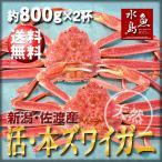 活ズワイガニ姿 新潟・佐渡産「活 本ズワイガニ」(生 本ずわい蟹)特大800g以上 2杯 送料無料