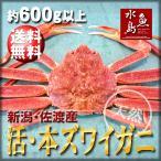 活ズワイガニ姿 新潟・佐渡産「活 本ズワイガニ」(生 本ずわい蟹)大600g以上 送料無料