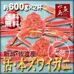 活ズワイガニ姿 新潟・佐渡産「活 本ズワイガニ」(生 本ずわい蟹)大600g以上 2杯 送料無料