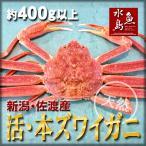 活ズワイガニ姿 新潟・佐渡産「活 本ズワイガニ」(生 本ずわい蟹)400g以上