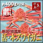 活ズワイガニ姿 新潟・佐渡産「活 本ズワイガニ」(生 本ずわい蟹)400g以上 2杯 送料無料