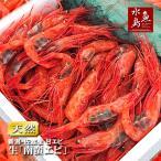 甘エビ「新潟・佐渡産 南蛮エビ」獲れたて生・刺身用 大サイズ1kg(冷蔵)