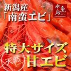 新潟産 甘エビ「南蛮エビ」鮮度抜群・刺身用 極上特大サイズ500g(冷凍)