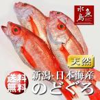 のどぐろ 新潟・日本海産 ノドグロ 300g以上・4尾(生冷凍)送料無料