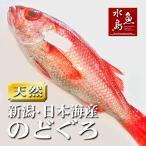のどぐろ 新潟・日本海産 ノドグロ 900g以上・1尾(生冷凍)送料無料