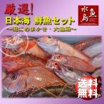 厳選 日本海の鮮魚セット「海におまかせ・大漁箱 超贅沢編」 大満足詰め合わせ 送料無料