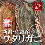 新潟・佐渡産 天然 ワタリガニ 渡り蟹 中5杯 送料無料