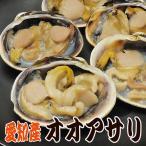 愛知のオオアサリ[活け1〜1.2kg] 5個前後 バーベキューの定番♪