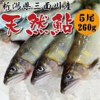 新潟県三面川産 / 天然鮎(あゆ) 5尾入 約260g 冷凍