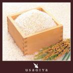 【ゾロ目の日クーポン】 こしひかり 10kg ブレンド お米