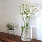 花瓶 球根用 一輪挿し 水栽培 ガラスベース おしゃれ 切り花 水苔栽培 ガラス