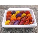 愛媛 活き ( ヒオウギ貝 ) 20枚 ホタテを超える濃厚な旨味 送料無料 宇和海の幸問屋