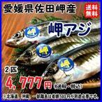 愛媛 ( アジ ) 天然一本釣り 約350g 2匹 浜から直送 送料無料 宇和海の幸問屋